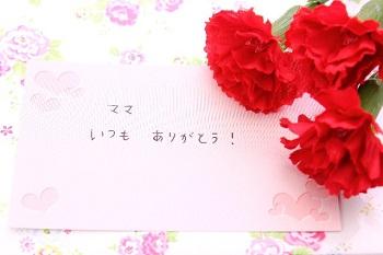 carnation (3)