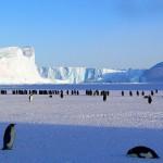 北極と南極は違う?寒いのはどっち?