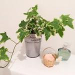 ミニ観葉植物!育てやすいのはコレ!