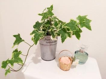 pots (4)