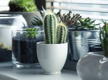 pots (5)