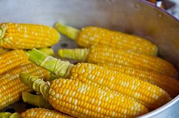 corn-350